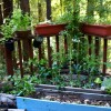 Made in the Shade: Vegetable Gardening in NorCal