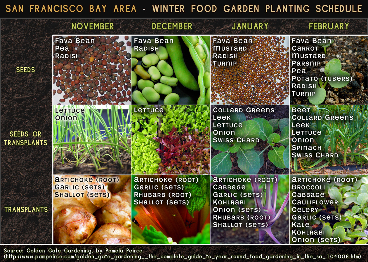 San Francisco Bay Area Winter Food Garden Planting Schedule